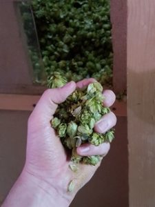 leaf hops, whole hops