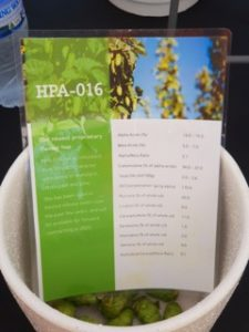 HPA 016 experimental hop variety