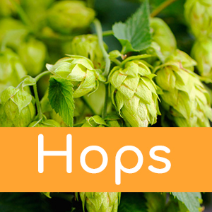 Home Brew Hops